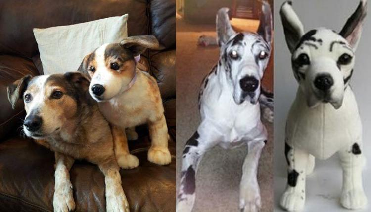 Cuddle Clones Make Your Dog Into A Stuffed Animal