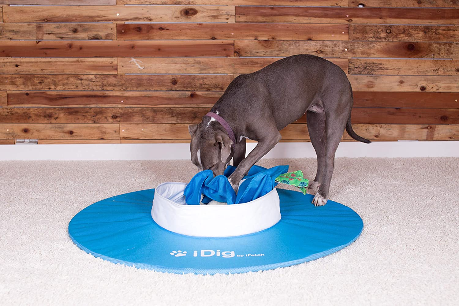 iDig Indoor Dog Digging Toy