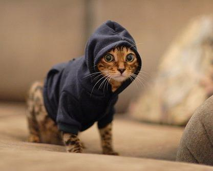 Hooded sweatshirt for dog or cat