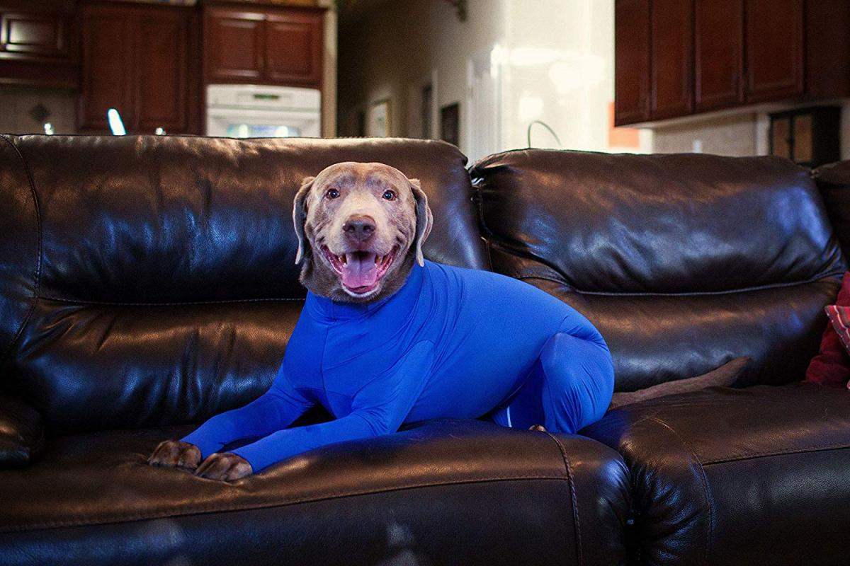 Shed Defender Dog Onesie prevents dogs from shedding all over your house - Dog onesie dog cone alternative