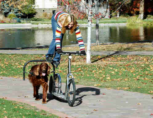 Dog Powered Scooters - Bicycle Dog Sledding - Road dog sledding scooter