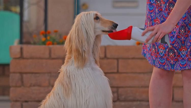 Drink&Buddy Shareable water bottle with your dog - share water bottle with your dog