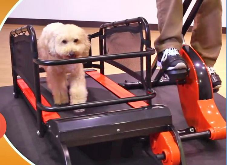 Dual Dog Exercise Treadmill and Exercise Bike Lets You Exercise With Your Dog Indoors - Dog treadmill