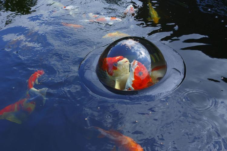 Fish Dome - Observe Fish Through Water Bubble