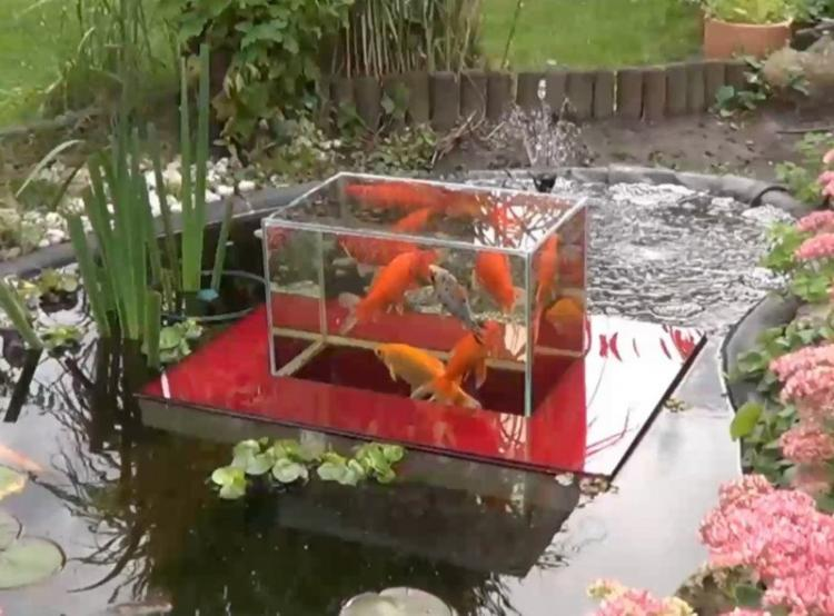 Floating fish koi pond observatory lets you view your fish for Coy fish tank