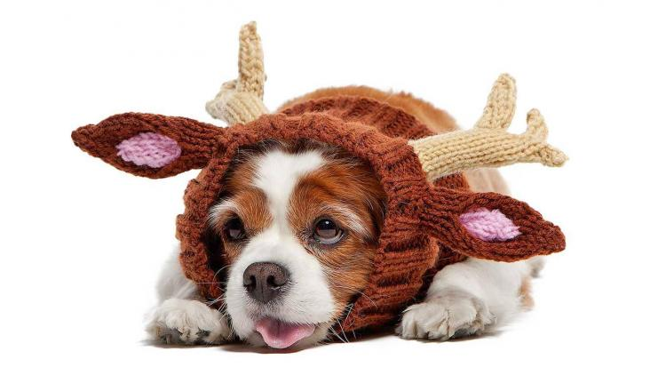 Zoo Snoods - Reindeer Shaped Dog Hood - Knit dog hood turns your dog into a reindeer