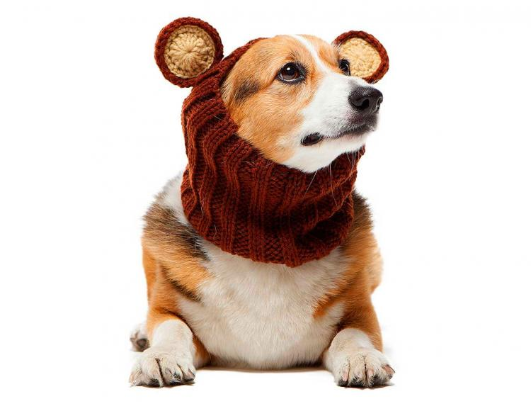 Zoo Snoods - Bear Shaped Dog Hood - Knit dog hood turns your dog into a bear