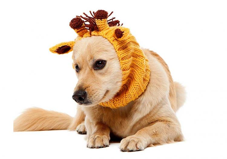 Zoo Snoods - Giraffe Shaped Dog Hood - Knit dog hood turns your dog into a giraffe