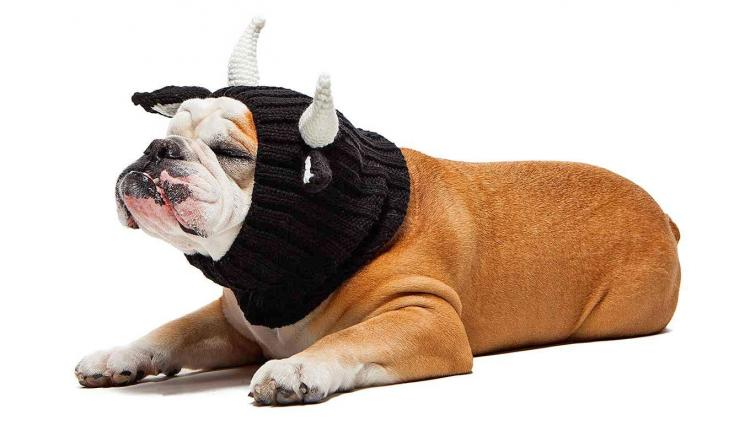 Zoo Snoods - Bull Shaped Dog Hood - Knit dog hood turns your dog into a Bull