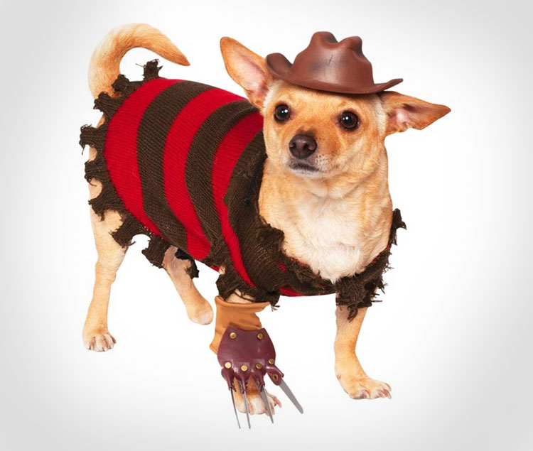 & Freddy Krueger Dog Costume