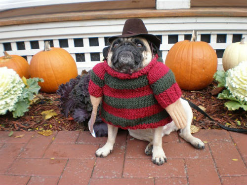 freddy-krueger-dog-costume-8733 - To sleep, perchance to dream... - Photos Unlimited