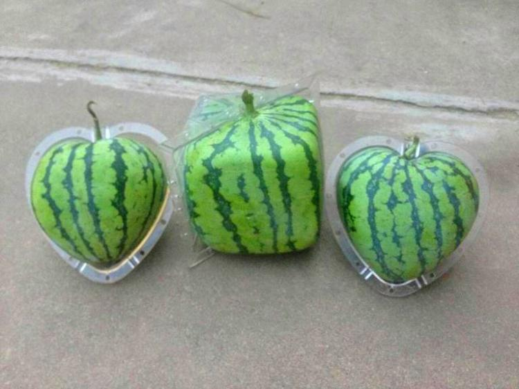 Fruit Molds Make Fun Shaped Fruits and Vegetables - Heart Shaped Watermelon - Square Watermelon - Buddha Pears - Square Apples
