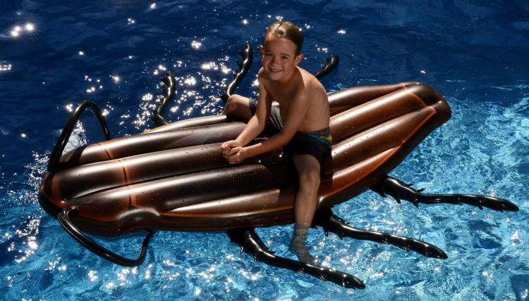 Giant Cockroach Pool Float - Cockroach inflatable lake float