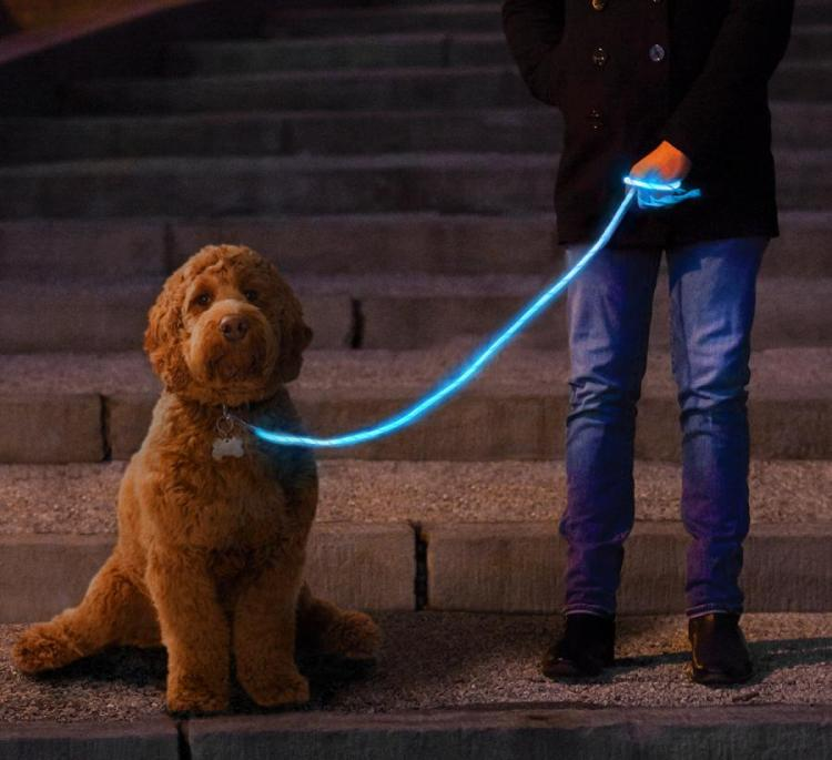 LED Light Up Dog Leash Gets You Easily Seen During Night Walks