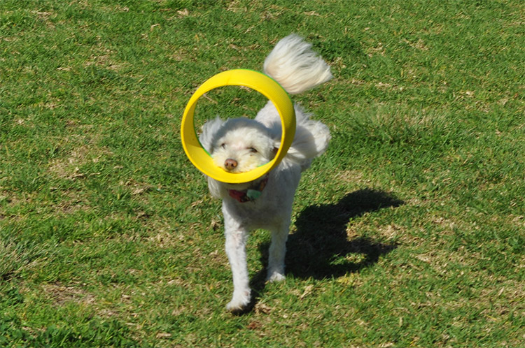 HurriK9 - Hurri-canine - Ring Launching Dog Fetch Toy