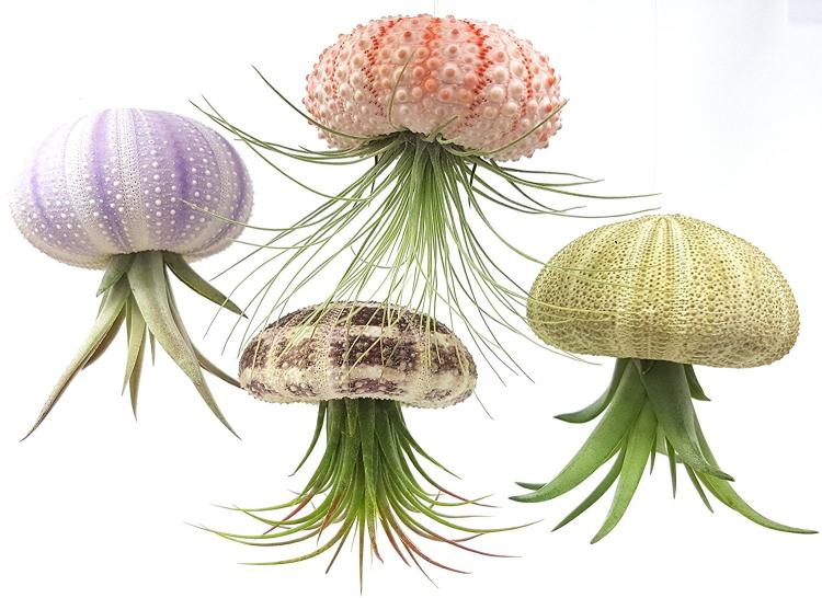 Jellyfish Air Plant Holders - Sea creature air plant holders