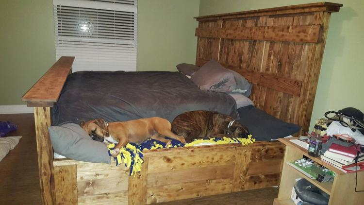Human Bed With Dog Bed Attached