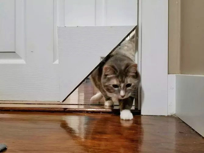 KittyKorner Turns Corner Of Door Into a Cat Pass