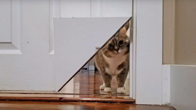 Kittykorner Turns Corner Of Door Into A Cat Pass