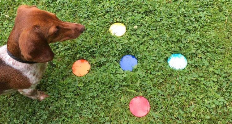 Lawn Dots - Coasters For Your Yard