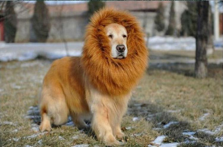 Lion Pet Costumes Dogs