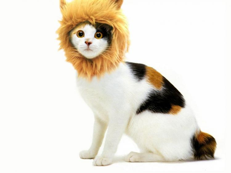 Turn Your Dog Or Cat Into a Lion With These Lion Mane Pet Wigs - Cat lion mane wig