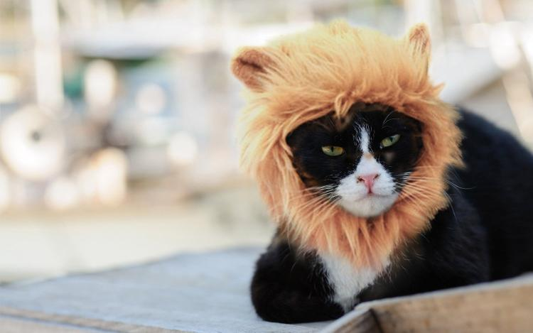 Lion S Mane Cat Hat