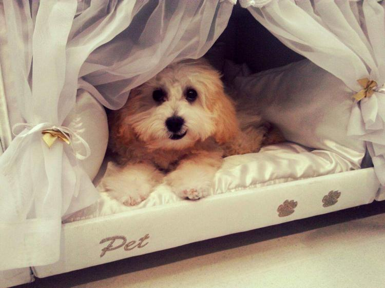 Box-Spring Mattress Dog Bed - Mattress With Dog Bed On Side