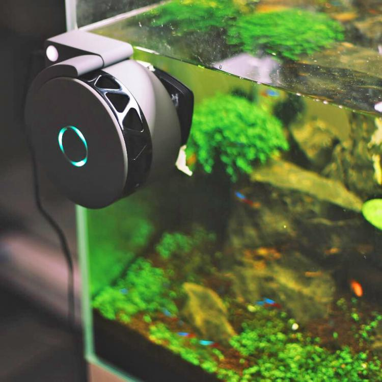 moai a robotic camera and cleaner for your aquarium ForMoai Fish Tank