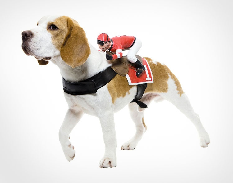 Horse Jockey Dog Rider Costume