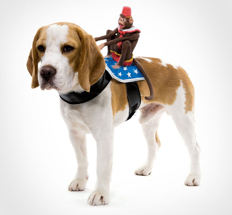 Monkey Dog Rider Costume