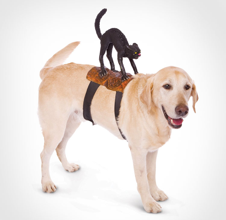 Black Cat Dog Rider Costume