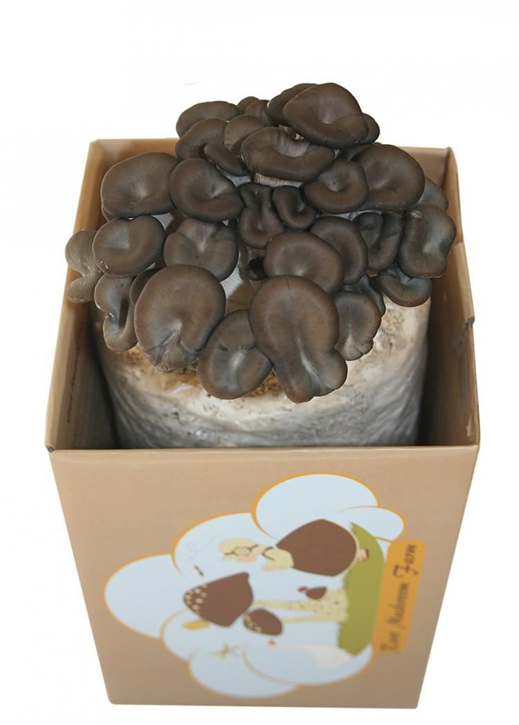 Root Mushroom Farm - Grow Your Own Oyster Mushrooms