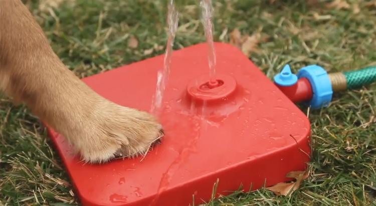 Pawcet Dog Drinking Fountain