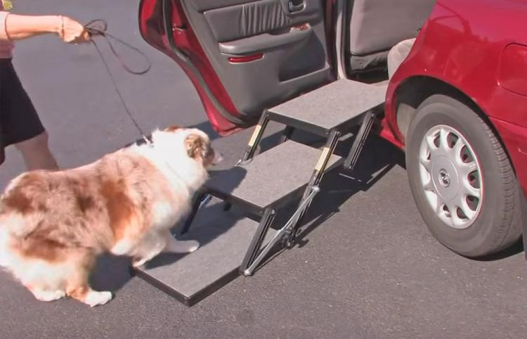 Stairs For Dogs To Get In Car