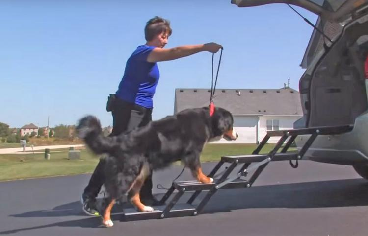 Pet Loader Folding Dog Stairs Helps Get Elderly Dogs Into Car or Truck