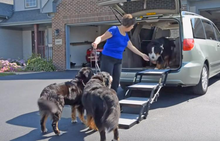 Pet Loader Folding Stairs Help Get Your Dog Into Your Car