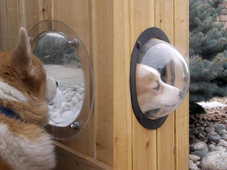 Pet Peek Fence Window For Dogs - bubble window for fences