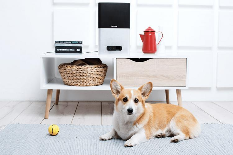 PetCube Bites - Interactive Pet Camera That Flings Treats - Treat launching pet camera