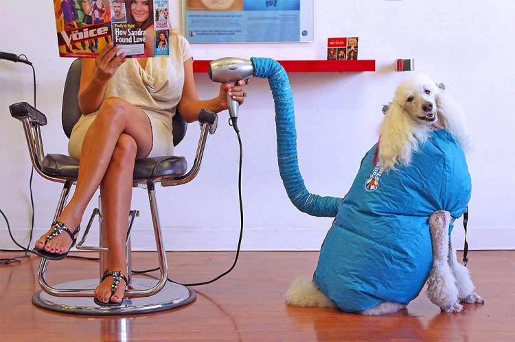 Puff-N-Fluff Dog Dryer - Inflatable dog dry uses blow-dryer to dry dog in seconds