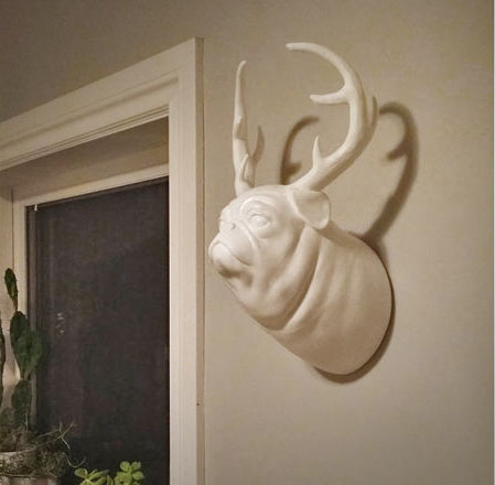 Pugalope: A Wall Mounted Pug With Antlers