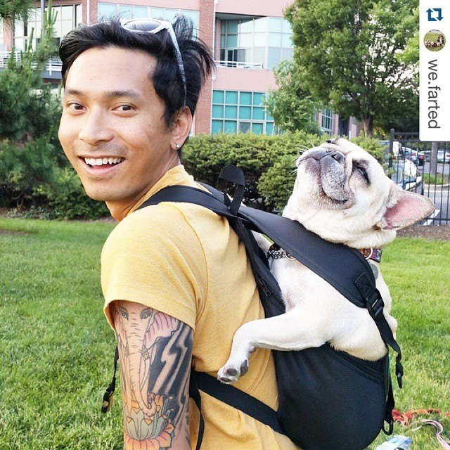 Ruffit Dog Carrier Backpack Carry Your Dog On Your Back