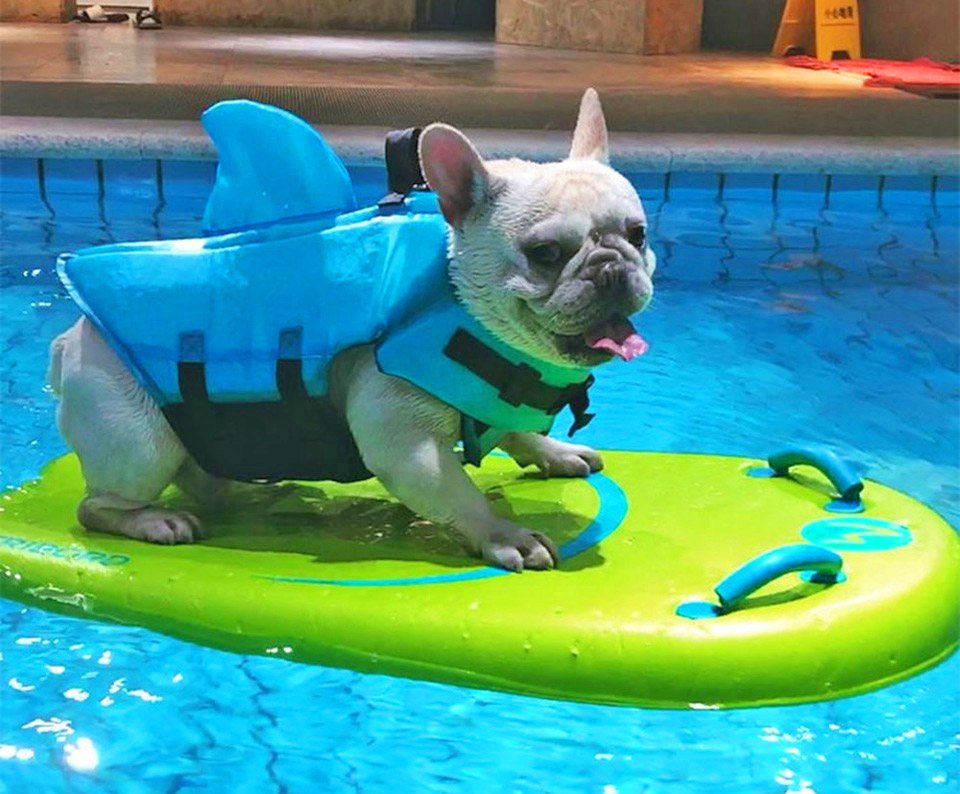Shark Fin Dog Life Jacket - Dorsal fin dog life jacket