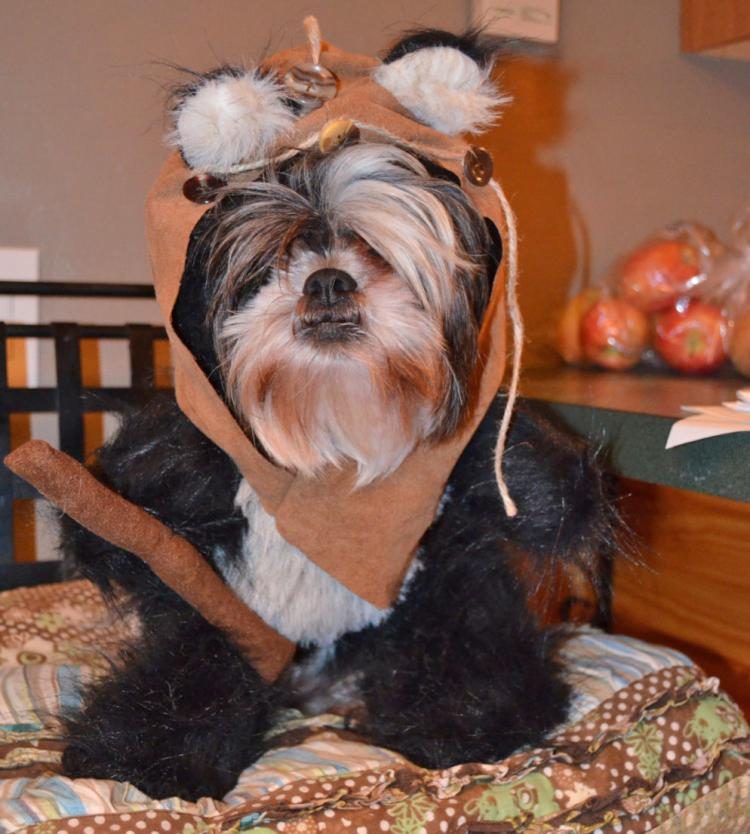 9e08a087715 Star Wars Ewok Dog Costume