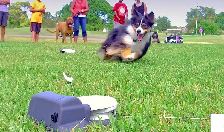 The SwiftPaws Capture The Flag Toy For Your Dog Sets Up In Just Minutes In  Any Backyard, And Since Itu0027s Powered By Batteries, You Can Use It Anywhere  ...