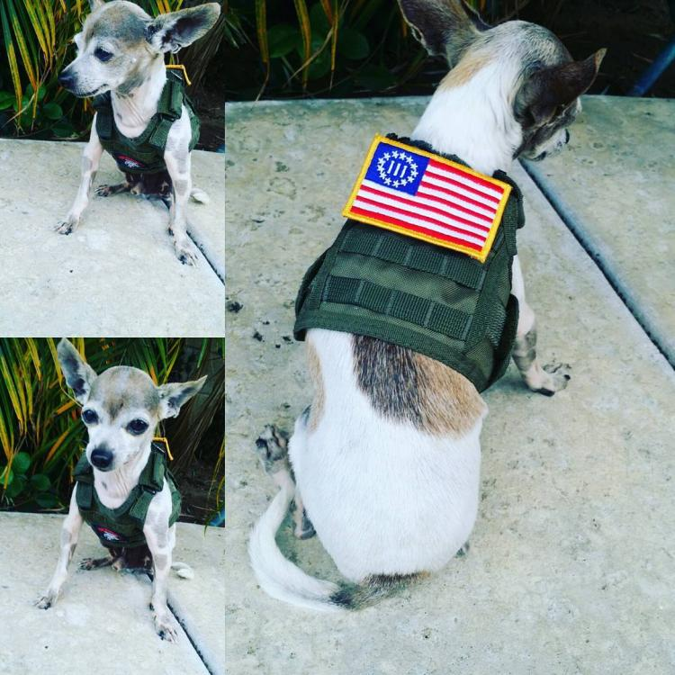 Tactical Vest Beer Koozie On Dog - Military Vest Beer Koozie On Dog