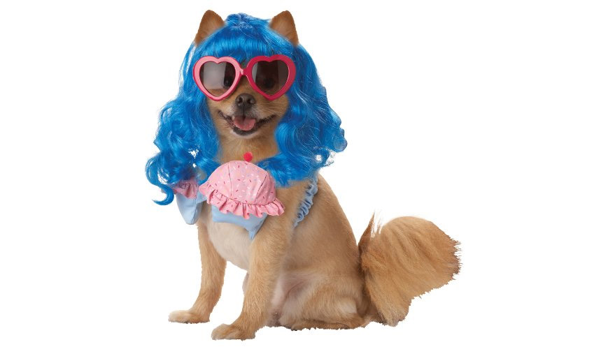 Katy Perry Dog Costume