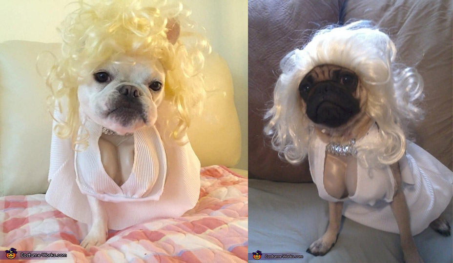 Marilyn Monroe Dog Costume - Funny Marilyn Monroe Halloween dog costume with cleavage