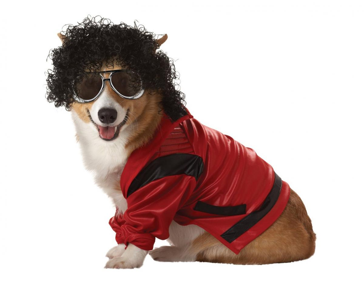 Michael Jackson Dog Costume