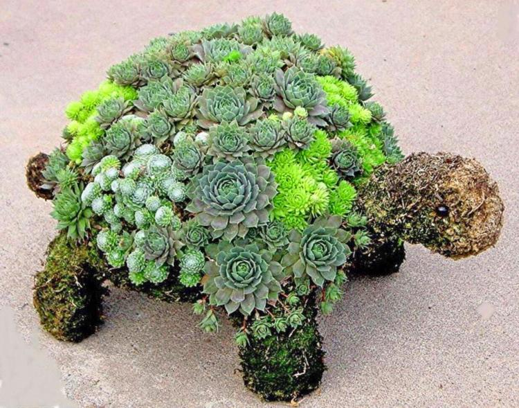 DIY Kit Lets You Grow an Adorable Turtle Made From Succulent Plants - Succulent plant turtle